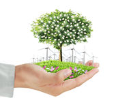 Human hands holding tree ,light bulb Royalty Free Stock Image