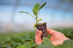 Human hands holding young plant with soil over blurred nature background. Ecology World Environment Day CSR Seedling Go Stock Photo