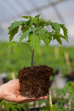 Human hands holding young plant with soil over blurred nature background. Ecology World Environment Day CSR Seedling Go Stock Photography