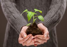 Human hands holding young spring sprout stock images