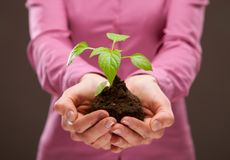 Human hands holding young spring sprout stock photo