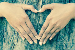 Human hands hugging tree Stock Photography