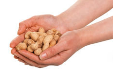 In human hands peanuts in the shell isolated on white . Stock Image