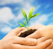 Human hands with plant sprout Royalty Free Stock Images