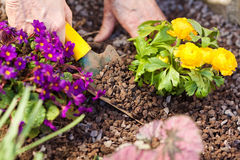 Human hands planting Royalty Free Stock Images