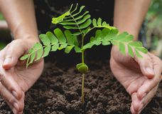 Human hands protecting green small plant life concept. stock photo