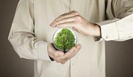 Human hands protecting tree Stock Image