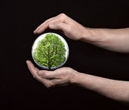 Human hands protecting tree Stock Photography