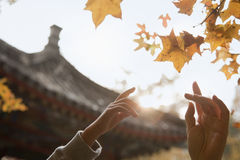Human hands reaching for a leaf in the autumn, lens flare Royalty Free Stock Photography