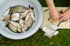 Human hands salt fish for food. Bream roach Royalty Free Stock Photography