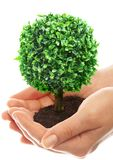 Human hands and tree Royalty Free Stock Photo