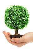 Human hands and tree Stock Images