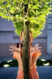 Human hands with tree. At evening. Sunny park royalty free stock photography