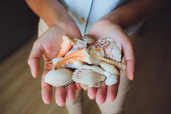Human hands, women holding seashells, starfish Royalty Free Stock Photo
