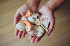 Human hands, women holding seashells, starfish Stock Image