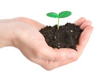 Human hands and young plant Royalty Free Stock Image