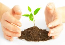 Human hands and young plant Royalty Free Stock Photos
