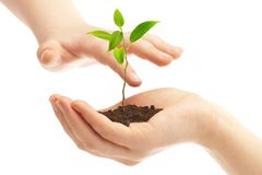 Human hands and young plant Royalty Free Stock Photography
