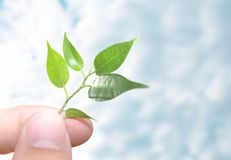 Human hands and young plant. Human hands hold and preserve a young plant Stock Image