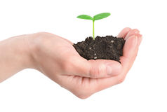 Human hands and young plant isolated Stock Image