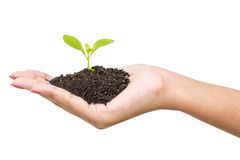 Human hands and young plant Royalty Free Stock Images