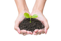Human hands and young plant Stock Images
