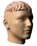 Human head with brain stock illustration