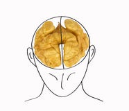 Human head with the brain in the form of a walnut on a white bac. Kground royalty free stock image