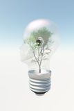 Human head light bulb with tree. Contained therein Royalty Free Stock Images