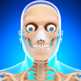 Human head skeleton in blue Stock Images