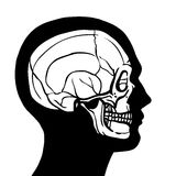 Human Head With Skull Stock Images