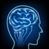 Human head. Stock illustration. Stock Photo