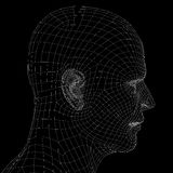 Human head. Wire frame render Royalty Free Stock Images