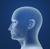 Human head wire model Royalty Free Stock Image