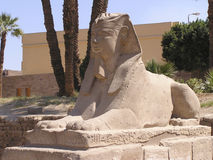 Human-headed sphinx 2. Close-up of an human-headed sphinx that runs from the Temple of Luxor to the Temple of Karnak about a mile away, build between 380-362 B.C royalty free stock images