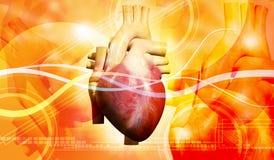 Human heart vector illustration