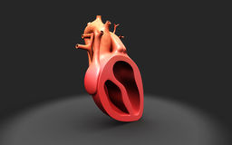 Human heart. Digital illustration of Human heart Royalty Free Stock Images