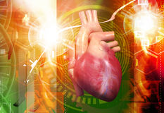 Human heart Stock Photos