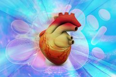 Human heart Royalty Free Stock Photography