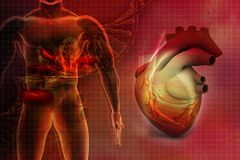 Human heart. Digital illustration of Human heart in abstract background Royalty Free Stock Photography