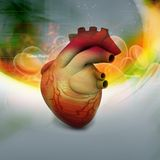 Human heart. Digital illustration of Human heart in abstract background Stock Image