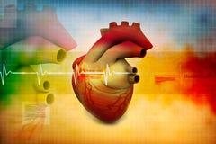 Human heart. Digital illustration of Human heart Royalty Free Stock Image