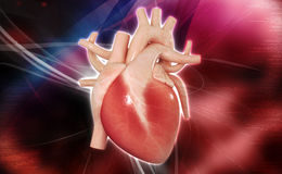Human heart. Digital illustration of a human heart in white background stock images