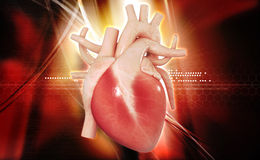 Human heart. Digital illustration of a human heart in white background stock photo