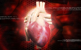 Human heart. Digital illustration of a human heart in colour background stock photography