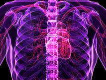 Human heart Stock Images