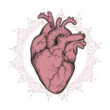 Human heart anatomically correct hand drawn line art and dotwork. Flash tattoo or print design vector illustration.  stock illustration