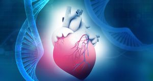 Human heart anatomy with dna. Abstract background. 3d illustration Stock Photography