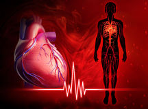 Human heart beat diagram Stock Photos