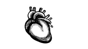 Human heart beat stock video footage